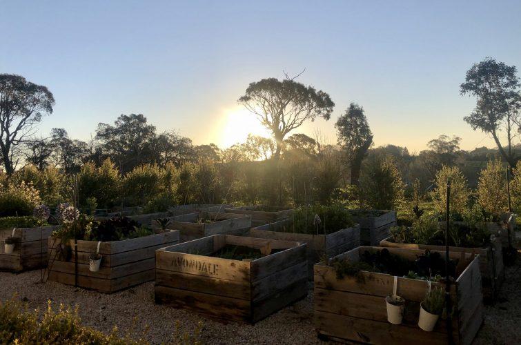 Raised garden beds – Starting from scratch….