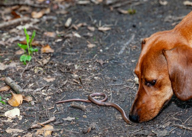 Dogs And Snakes