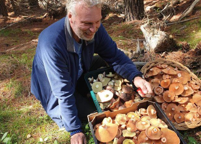 Central West, NSW, Mushroom Foraging